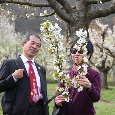 Visite des vergers avec le consulat du Japon